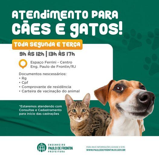 Atendimento veterinário gratuito para cães e gatos